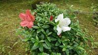 庭に‼ - 【日直田酒】 - 西田酒造店blog -