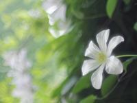 フラワーパークの花たち4 - 光の音色を聞きながら Ⅴ