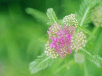 フラワーパークの花たち3 - 光の音色を聞きながら Ⅴ