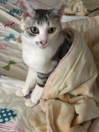 猫長女と猫次女 - 愛犬家の猫日記