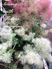 スモークツリー再入荷〜♪ -  Flower and cafe 花空間 ivory (アイボリー)