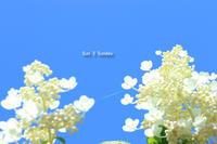 Sun 3 Sunday  あじさい編 - 心優先モード(^_^)v
