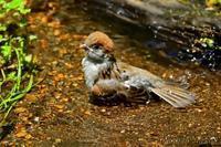 みちのく小鳥達15 - みちのくの大自然