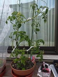 家庭菜園:植替え&種蒔き! - Leo Bunksで車遊泊
