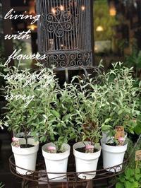 ロシアンオリーブ -  Flower and cafe 花空間 ivory (アイボリー)