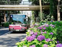 井の頭公園のアジサイ - 黄色い電車に乗せて…