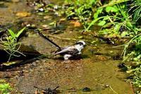 みちのく小鳥達16 - みちのくの大自然