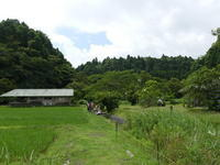 ハス開花。ツバメが飛びます - 千葉県いすみ環境と文化のさとセンター