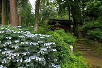 緑に癒される浄智寺 - 暮らしを紡ぐ2