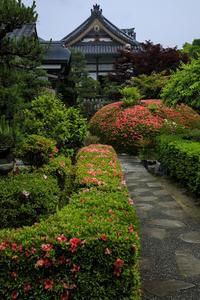 サツキ咲く正法寺(西山) - 花景色-K.W.C. PhotoBlog
