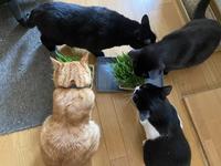猫草ぱ〜り〜のはずが。 - gin~tetsu~nosuke