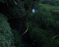 firefly 2020 - Tom's starry sky & landscape