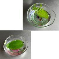 水草とデコパージュ・ドライフラワー - Happy Palette
