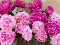 ストップ廃棄!1本でも多くのお花を救おう! - ゆうゆう素敵な暮らしの手帖