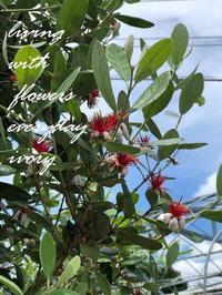 フェイジョア -  Flower and cafe 花空間 ivory (アイボリー)