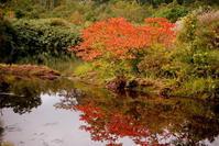 栗駒山シラタマノキ湿原前半 - 日本あちこち撮り歩記