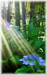 朝の光の中で・・・ - おだやかに たのしく Que Sera Sera