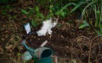 猫トイレ問題 - 世話要らずの庭