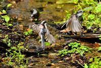 みちのく小鳥たち18 - みちのくの大自然