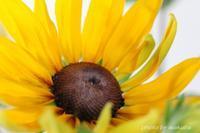 マクロレンズでのぞく花の世界(^^♪ - 自然のキャンバス