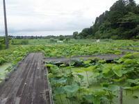 涼しかったり、蒸し暑かったり - 千葉県いすみ環境と文化のさとセンター