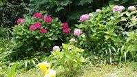 鎌倉は今、紫陽花が綺麗です。 - 鎌倉fonteの日常