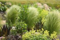 中之条ガーデンズ2020#8宿根草根付くスパイラルガーデン - 風の彩りー3