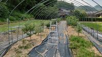 露地植えブルーベリー防鳥網設置 その1 (ハウス部材施設) - 初めてのブルーベリー栽培記