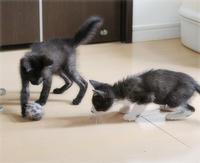 子猫、サッカー選手になる - ちいさなチカラ