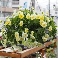 7月の営業時間 - sola og planta ハーバリストの作業小屋
