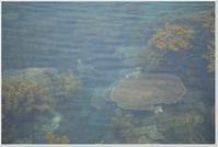 竜串海岸(土佐清水市) - ハチミツの海を渡る風の音