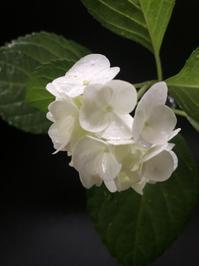 届ける - 花の窓