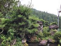 梅雨の庭木手入れ - 三楽 3LUCK 造園設計・施工・管理 樹木樹勢診断・治療