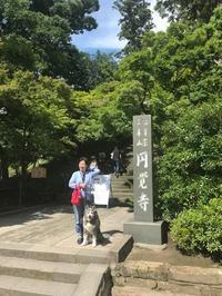 鎌倉は犬にも優しい街 - 海辺のセラピストは今日も上機嫌!