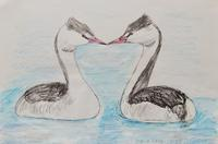 #ネイチャー・スケッチ  #Naturejournal 『冠鳰』Podiceps cristatus - スケッチ感察ノート (Nature journal)