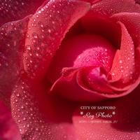 夏のバラ - Rey Photo