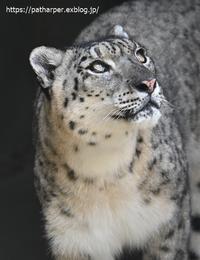 2020年6月王子動物園2その2円形猛獣舎 - ハープの徒然草