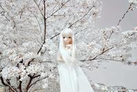 セシリーさんの魅力・・・其の六拾六(女神降臨!) - 屋根裏部屋の休日