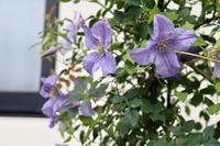 オレンジからブルーへ - my small garden~sugar plum~