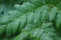 6月25日雨 - 菜やの便り