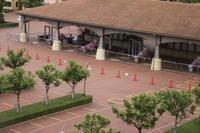 [入園方法①]TDSソーシャルディスタンス準備 - 東京ディズニーリポート