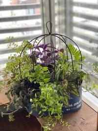 植物の力に感謝です♡ - 小さな庭 2