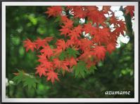 季節はずれの紅葉 - キルトとステッチ時々にゃんこ