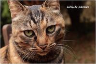 猫界の不祥事 - 今が一番