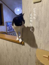 はちわれくりちゃん  あたしを誰やと? - gin~tetsu~nosuke