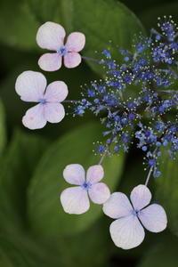 四片の花 - ecocoro日和