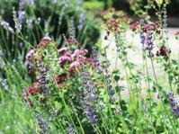 夏を告げる紫 - park diary