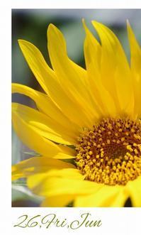 今年初のひまわり - 花ありて 日々