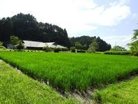 イスミスズカケ開花しました - 千葉県いすみ環境と文化のさとセンター