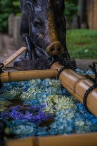 護王神社~茅の輪くぐり - 鏡花水月